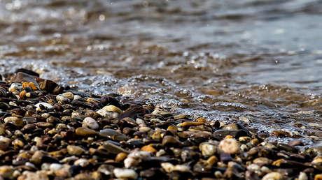 fotos hallan playa gales foca casi estrangulada red
