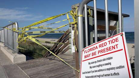 La marea roja amenaza con más devastación tras el paso del huracán Michael