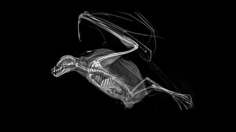 fotos llegan corazón radiografías animales entusiasman red