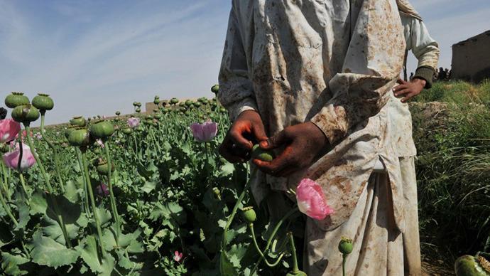Afgan opium poppy farmers score opium poppies. (AFP Photo / Bay Ismoyo)