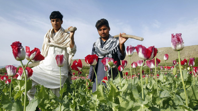 Farmers walk at a poppy field in Jalalabad province (Reuters/Parwiz)