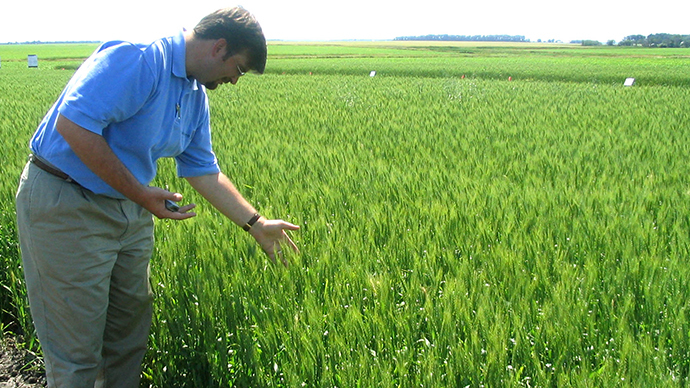 Michael Doane, Monsanto's wheat industry affairs director, looks at growth in a wheat field in an undisclosed location in North Dakota in this undated file photo. (Reuters / Carey Gillam)