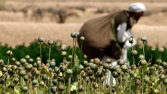 An Afghan man walks in front of a poppy field in a village in Golestan district of Farah province.(Reuters / Goran Tomasevic)