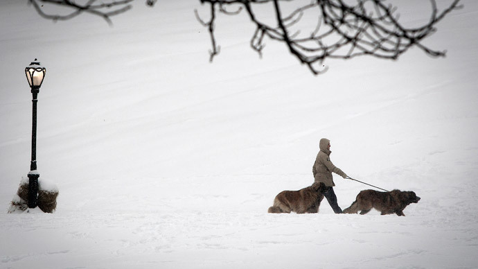 A person walks with dogs in the snow past Cedar Hill in Central Park in New York.(Reuters / Carlo Allegri)