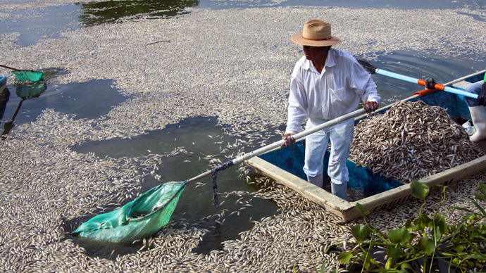 "Fishermen collect dead ""popocha"" fish at the lagoon of Cajititlan in Tlajomulco de Zuniga, Jalisco State, Mexico, on September 1, 2014.(AFP Photo / Hector Guerrero)"