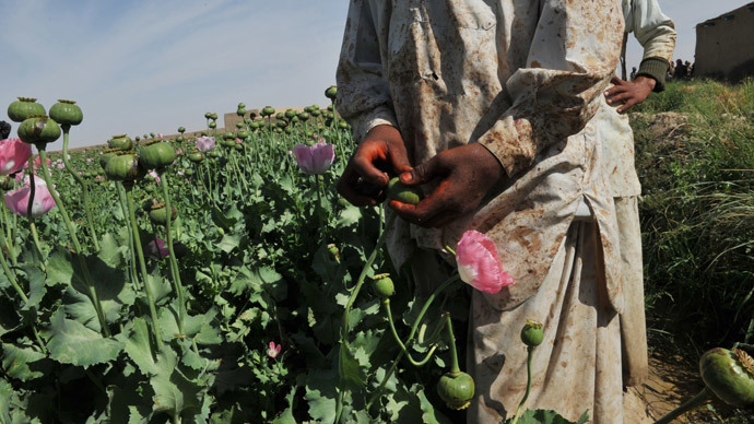 Afgan opium poppy farmers score opium poppies in a field at Habibullah village in Khanashin District, Helmand province.(AFP Photo / Bay Ismoyo)