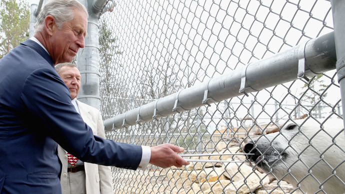 Prince Charles, Prince of Wales feeds a polar bear called Hudson as he visits Winnipeg Zoo on May 21, 2014 in Winnipeg, Canada.(AFP Photo / Chris Jackson)
