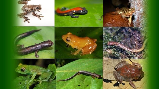 Crece vertiginosamente la cantidad de especies que se descubren