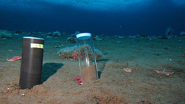 Hay vida en los sótanos de la Tierra: hallan bacterias en el fondo de la corteza oceánica