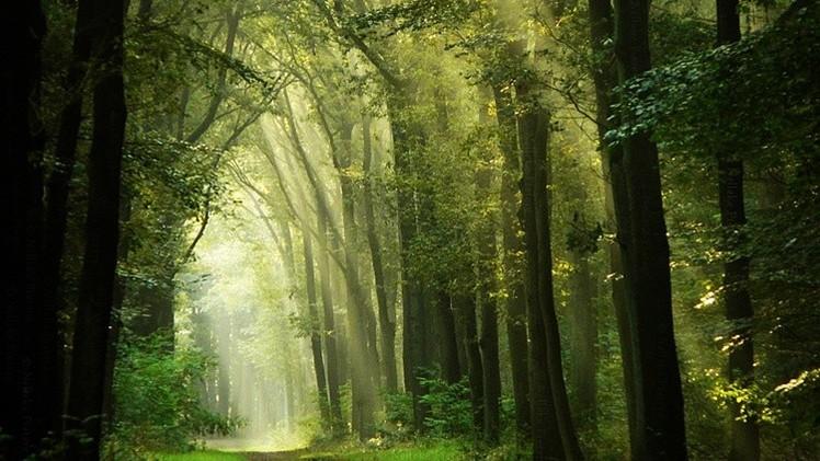 Un buzo encuentra un antiguo bosque de la Edad de Hielo bajo el Mar del Norte