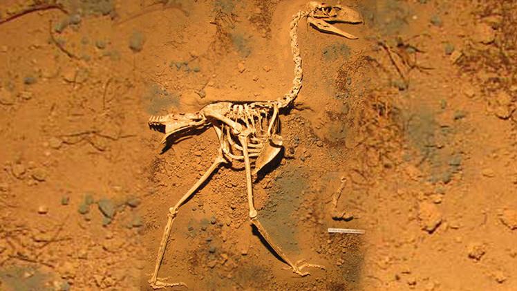 Descubren en Argentina los fósiles mejor conservados de un 'ave del terror'