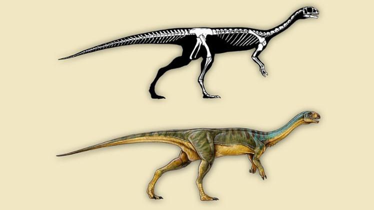 Un chileno de 7 años descubre una nueva especie de dinosaurio