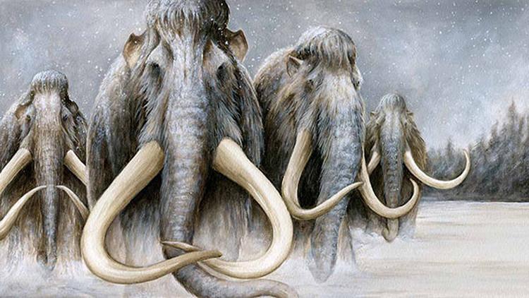 """Científicos: La 'resucitación' de los mamuts es """"inevitable"""""""