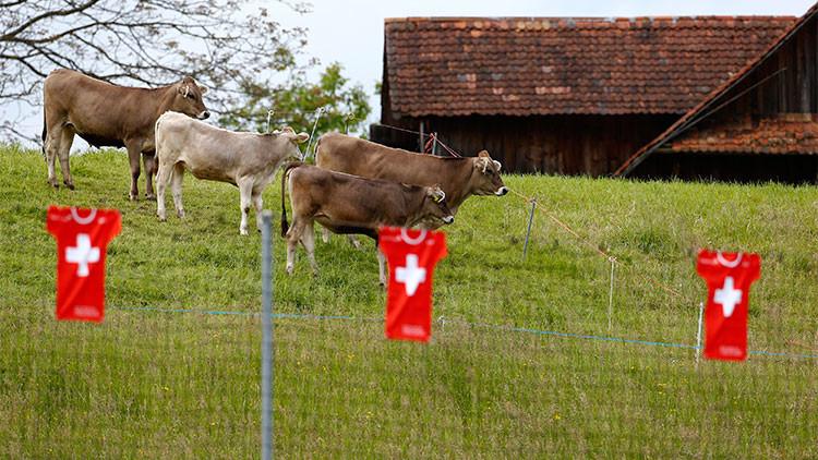 Las relaciones entre Francia y Suiza, enturbiadas por un escándalo de helicópteros militares y vacas