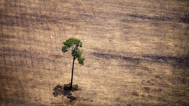 Las devastadoras fotos de los bosques del mundo en peligro de extinción
