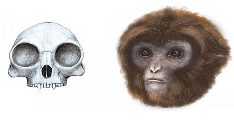 Se completa la cadena evolutiva: científicos descubren un nuevo ancestro humano (Fotos)