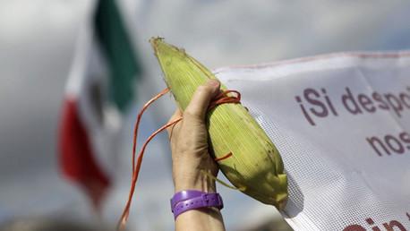 Una protesta contra Monsanto en el centro de México D.F. en septiembre de 2014