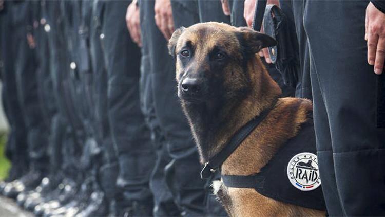 El mundo llora al perro asesinado por terroristas y se olvida de los atentados en Nigeria