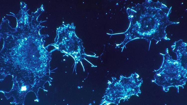 ¿Más cerca de lo que pensamos? Científicos revelan que las proteínas humanas provocan cáncer