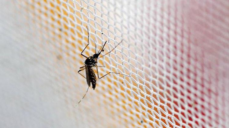China prepara un ejército de mosquitos de laboratorio para eliminar al virus del Zika