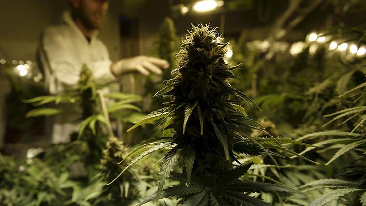 """Más de 1000 personalidades mundiales piden un giro en la """"desastrosa"""" guerra contra las drogas"""
