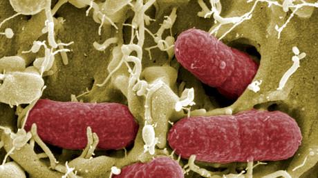 Una de las especies de Escherichia coli