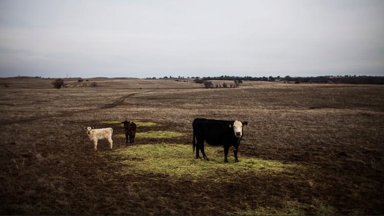Los verdaderos dueños de EE.UU.: los diez mayores terratenientes estadounidenses