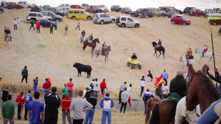 VIDEO FUERTE: Acoso con vehículos y golpes con varas o piedras, así son los rally de animales (+18)