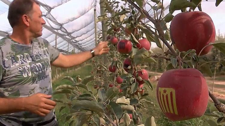 La última moda frutal: Manzanas independentistas en Cataluña