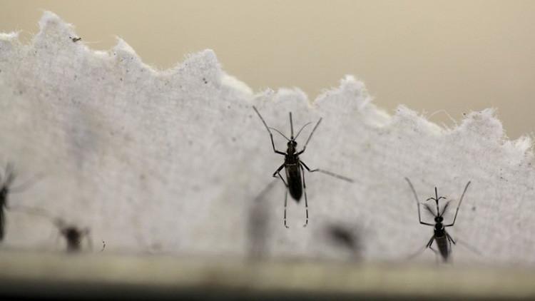 Este virus poco conocido mantiene en vilo a los científicos