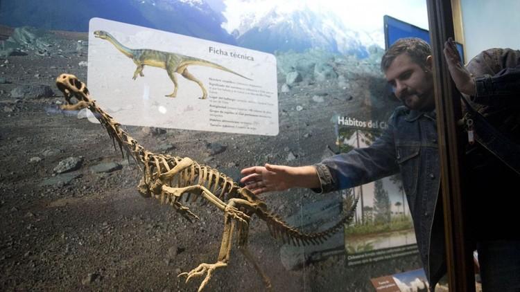 Descubren en el 'dinosaurio Frankenstein' de Chile un eslabón perdido de la evolución
