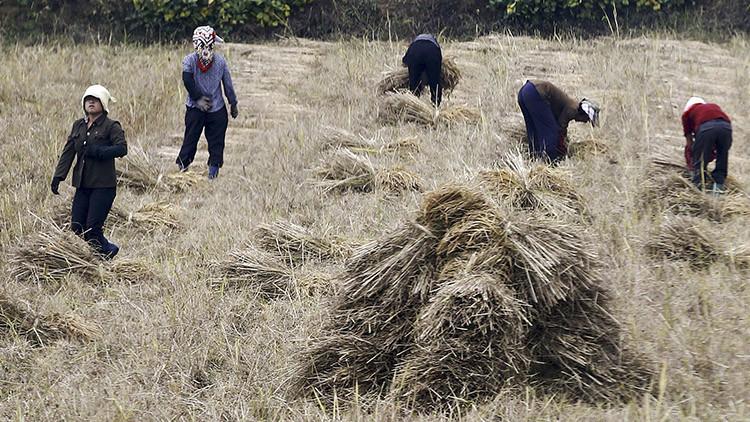 Corea del Norte corre peligro de sufrir una hambruna por la peor sequía en casi dos décadas