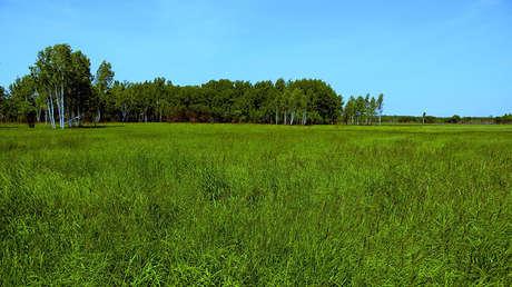 Una parcela gratuita ofrecida en la región de Jabárovsk (Lejano Oriente).