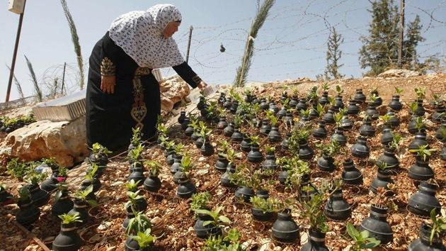 'Arte de la resistencia': Palestinos plantan flores en latas de gas lacrimógeno israelíes
