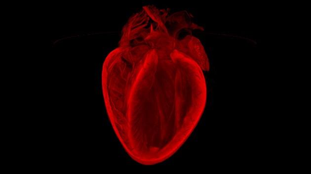 Imagen del corazón que se cura a sí mismo gana un premio mundial