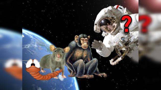 Irán, a punto de enviar al espacio a más seres vivos