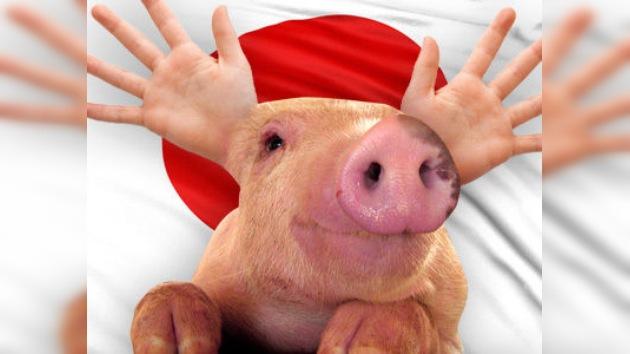 Los órganos humanos para trasplantes podrían ser creados en cerdos