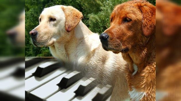 El vídeo de un dúo de perros pianistas triunfa en Internet