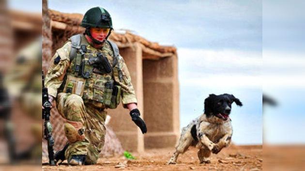 Un perro rastreador muere de pena tras el fallecimiento de su dueño
