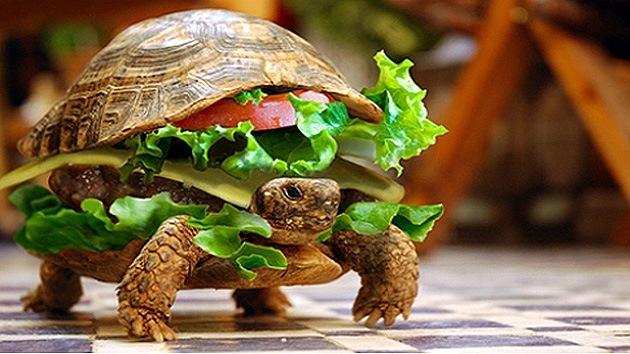 En un aeropuerto de China un hombre intenta pasar una tortuga… en una hamburguesa
