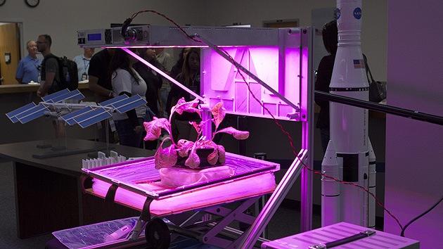 La NASA lanza Veggie, una misión para el cultivo de verduras en el espacio