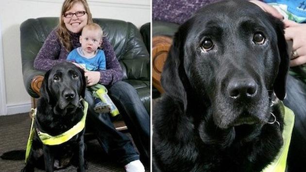 Un perro guía salva a un bebé de ser atropellado