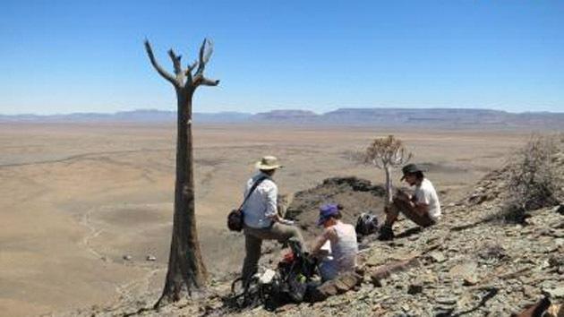 Primeros esqueletos: hallan un arrecife de 550 millones de años en Namibia