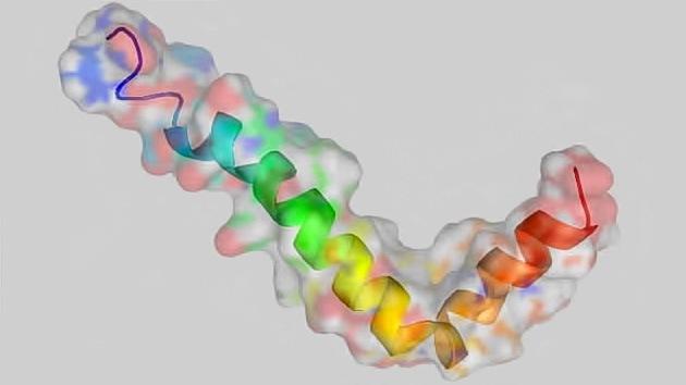 Diseñan una nueva molécula para el tratamiento del mal de Alzheimer