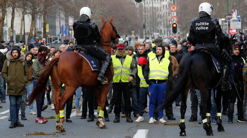 Polizei in Brüssel hält Gelbwesten in Pferdestall fest – angeblich auf Geheiß des Bürgermeisters