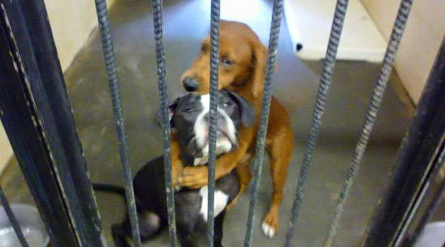 Heartbreaking pic of 2 hugging dogs saves them from being euthanized in US animal shelter