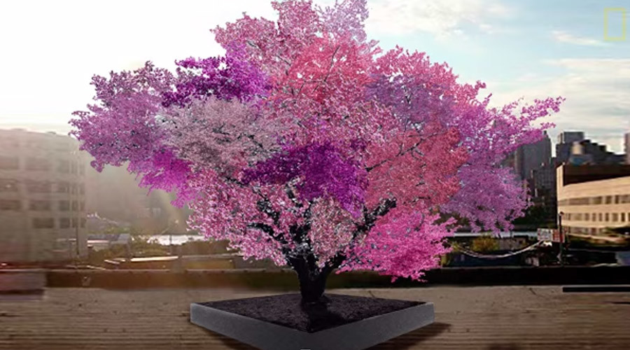 Magic tree: Multi-blossom Hybrid Grows 40 Different Kinds of Fruit