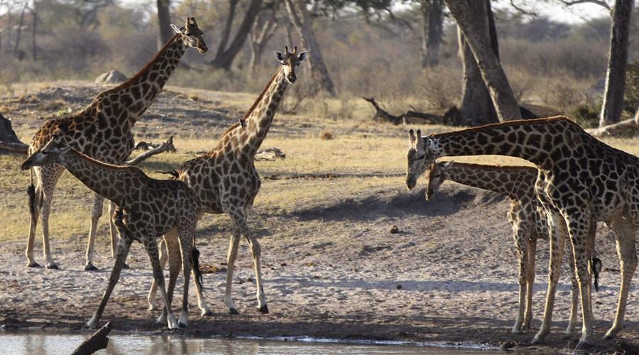 © Philimon Bulawayo