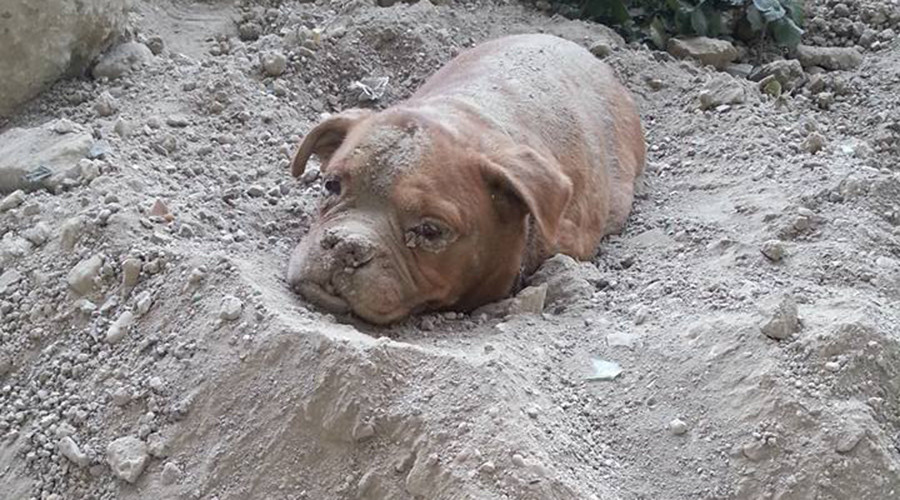 Dog found buried alive in France triggers online fury, petition for owner's 'maximum sentence'