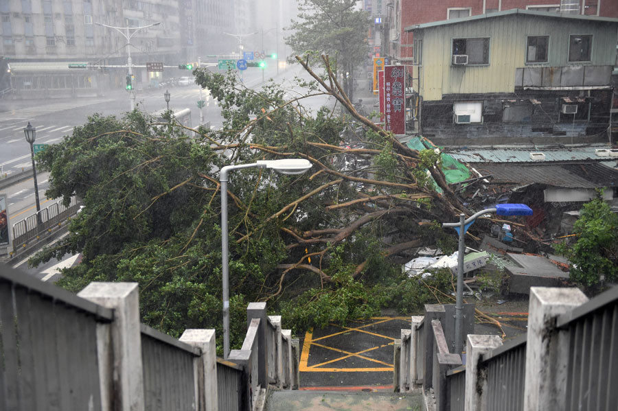 Damaged trees lie on the road as typhoon Soudelor hits Taipei on August 8, 2015. © Sam Yeh